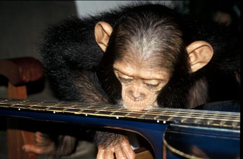 Future the chimp plays with a guitar