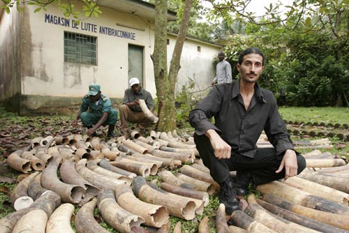 Ofir Drori with seized ivory